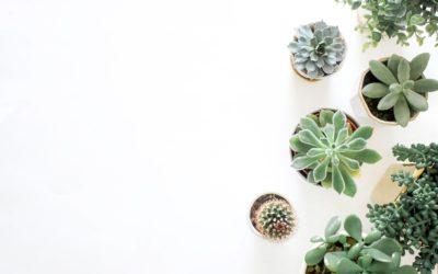 Quali piante mettere in camera da letto?